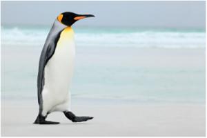 Google Penguin 4.0 update